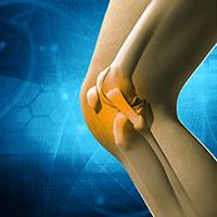 ひざ関節のイラスト