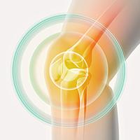 膝関節に効いているイラスト