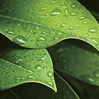 水滴のついた葉っぱ