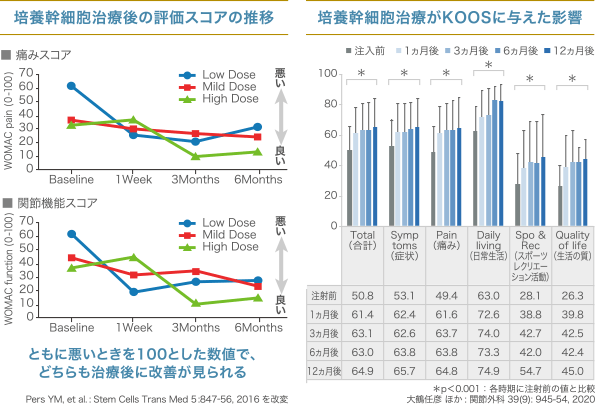 培養幹細胞治療後の評価スコアの推移/培養幹細胞治療がKOOSに与えた影響